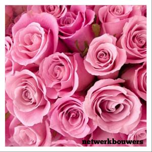 gratis roze rozen netwerkbouwers